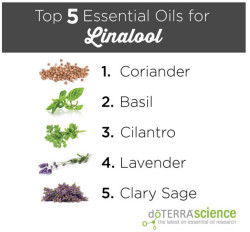 linalool top 5 essential oils for it
